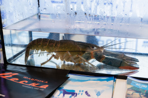 SEAFOOD EXPO RUSSIA 2019 featured a real trawl net and more than 30 commercial-grade species of live hydrobionts